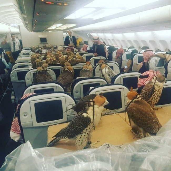 Τα 15 πιο παράξενα πράγματα που έχουν συμβεί ποτέ κατά τη διάρκεια πτήσης