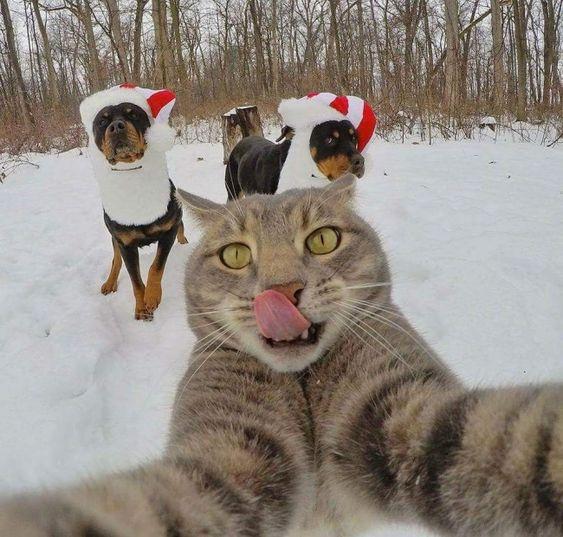 Γάτες σε απίστευτα ανθρώπινες στάσεις