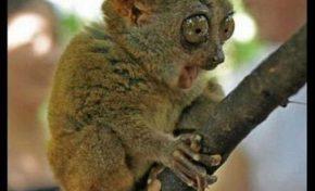 25+ απίστευτα αστείες φωτογραφίες ζώων που πρέπει να δεις άμεσα