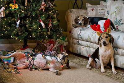 21 απίστευτα αστείες στιγμές με κατοικίδια τα Χριστούγεννα