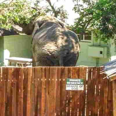 15 + αστείες φωτογραφίες με πινακίδες «Πρόσεχε σκύλος» και τα απίστευτα κατοικία