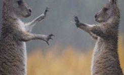 27 εντυπωσιακές φωτογραφίες από το φύση που δεν θα πιστέψεις στα μάτια σου (Μέρος 2ο)
