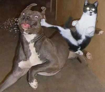 23 εντυπωσιακές Φωτογραφίες Αποδεικνύοντας ότι οι σχέσεις γάτας και σκύλου είναι οι πιο δύσκολες (Μέρος 1ο)